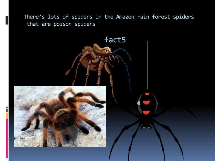There's lots of spiders in the Amazon rain forest spiders