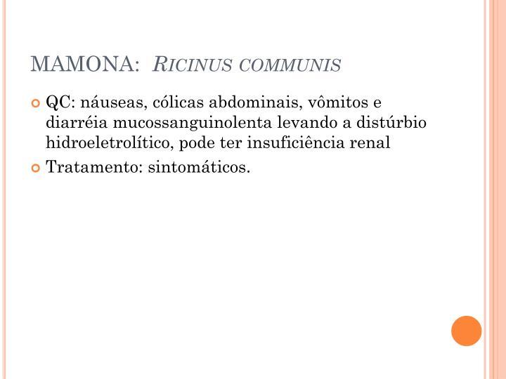MAMONA: