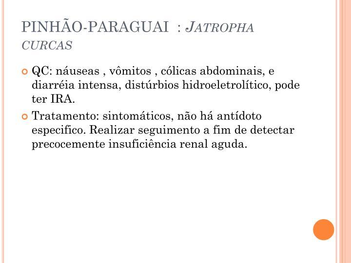 PINHÃO-PARAGUAI  :