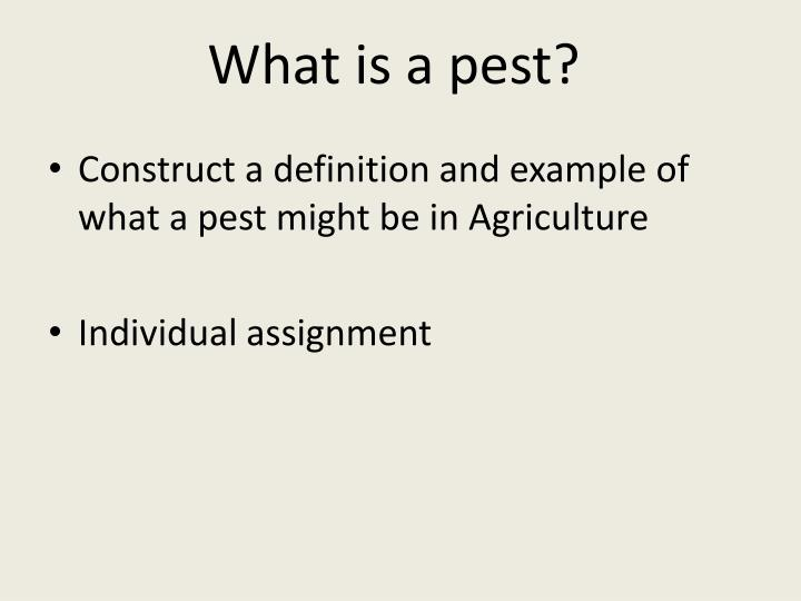 What is a pest?