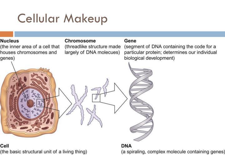 Cellular Makeup