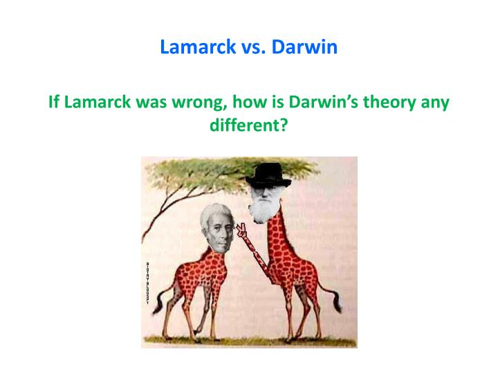lamarcks influence in the development of darwins theory of evolution Jean-baptiste lamarck (1774 – 1829) was a french botanist who proposed two  ideas that had great impact in the theory of evolution  uses most will undergo  hypertrophy and will become more developed  darwin also used lamarck's  inheritance of acquired characteristics as support for his natural selection idea.
