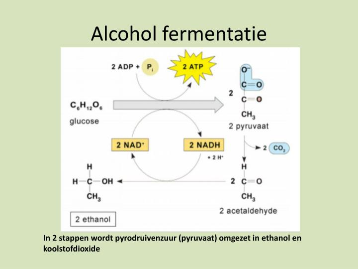 Alcohol fermentatie