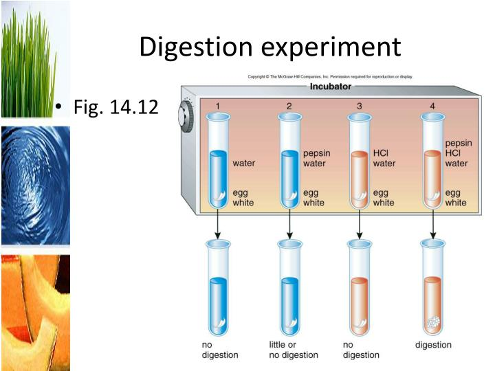 Digestion experiment