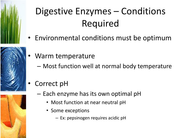 Digestive Enzymes – Conditions Required