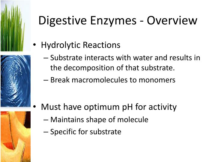 Digestive Enzymes - Overview