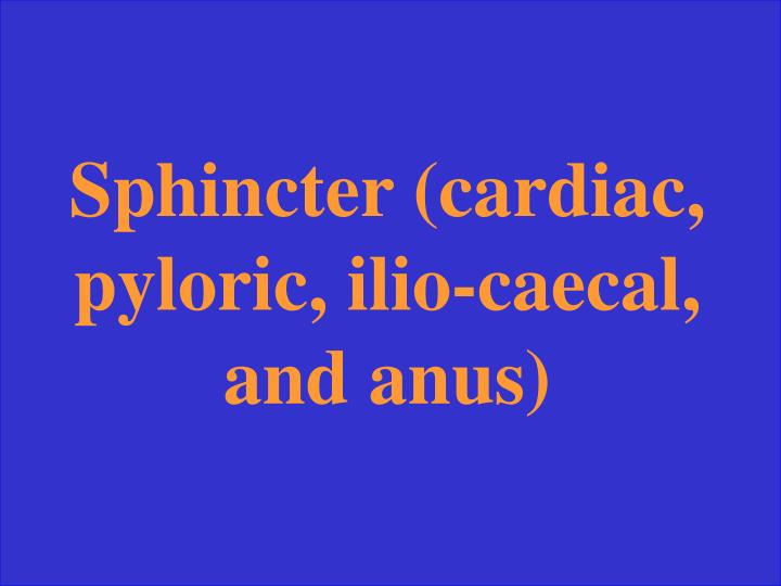 Sphincter (cardiac, pyloric, ilio-caecal, and anus)