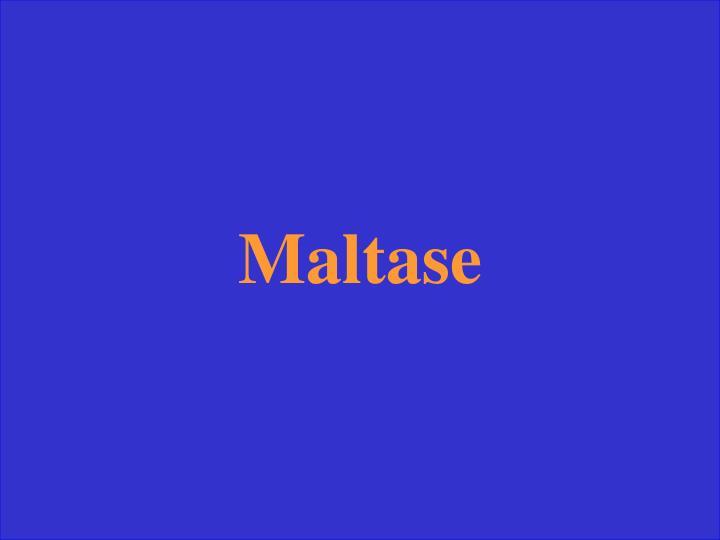 Maltase