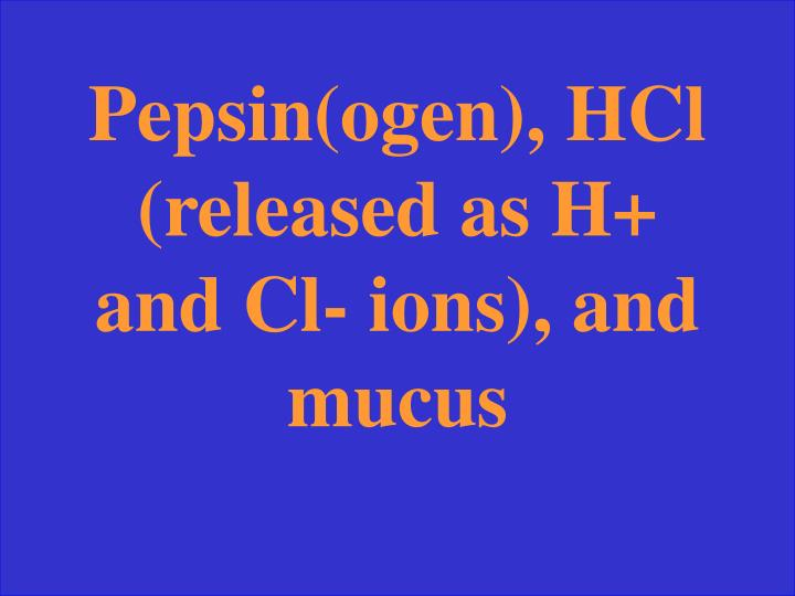 Pepsin(ogen), HCl (released as H+ and Cl- ions), and mucus