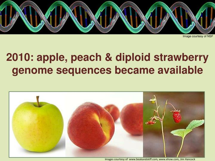 2010: apple, peach & diploid strawberry genome sequences became available