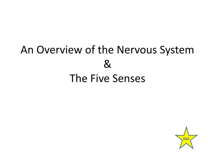 An overview of the nervous system the five senses