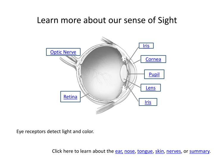 Learn more about our sense of Sight