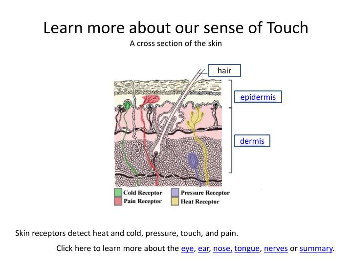 Learn more about our sense of Touch