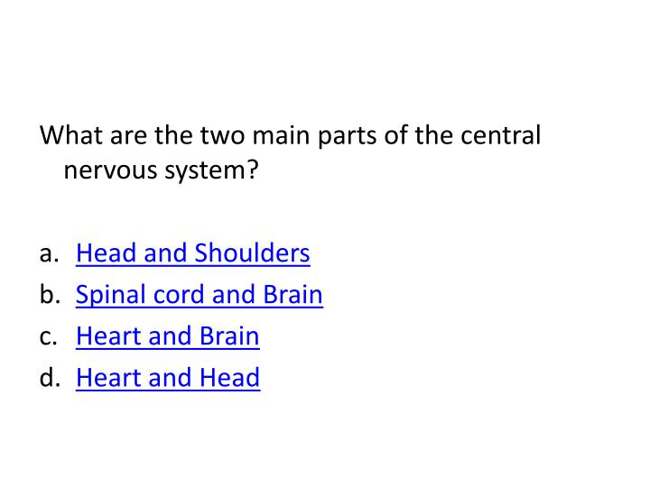 What are the two main parts of the central nervous system?