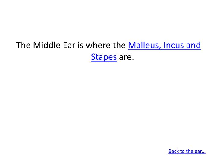 The Middle Ear is where the