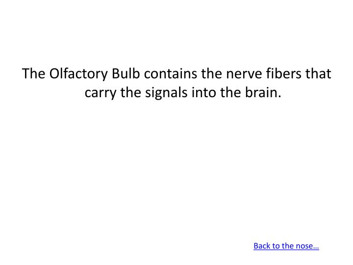 The Olfactory Bulb contains the nerve fibers that carry the signals into the brain.