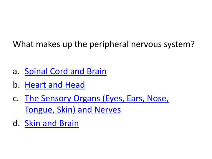 What makes up the peripheral nervous system?