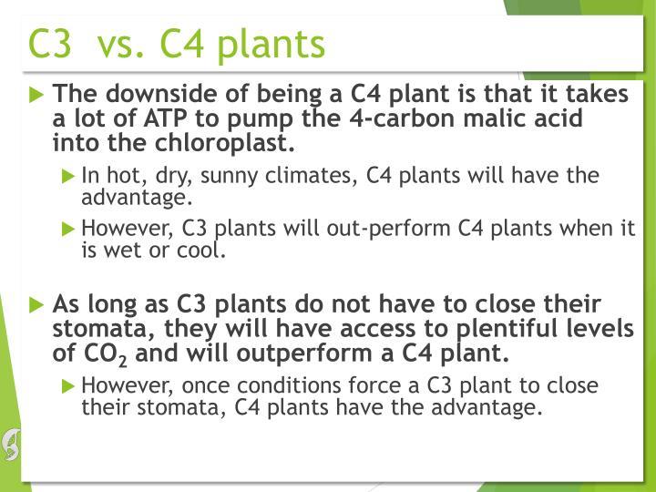 C3  vs. C4 plants