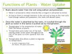 functions of plants water uptake