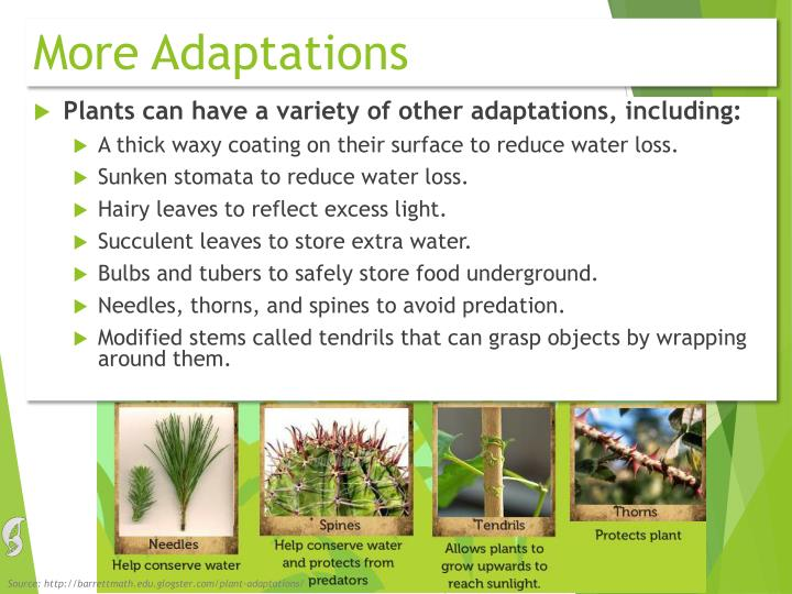 More Adaptations