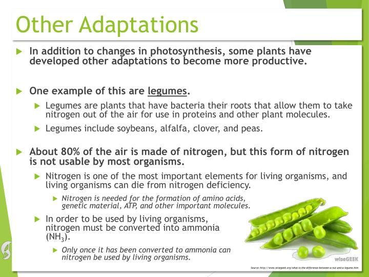 Other Adaptations