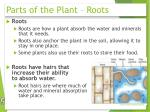 parts of the plant roots