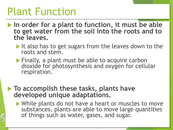 Plant Function
