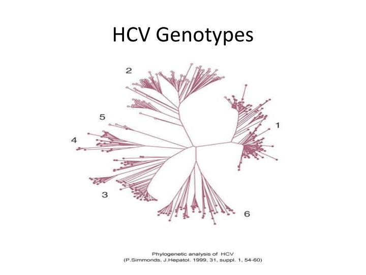HCV Genotypes