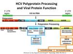 hcv polyprotein processing and viral protein function