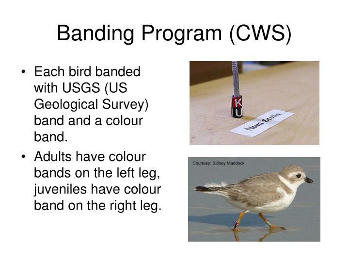 Banding Program (CWS)