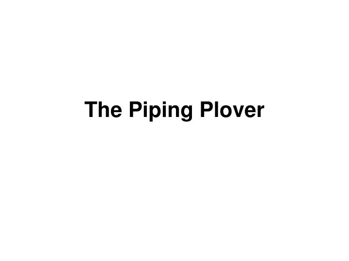 The piping plover