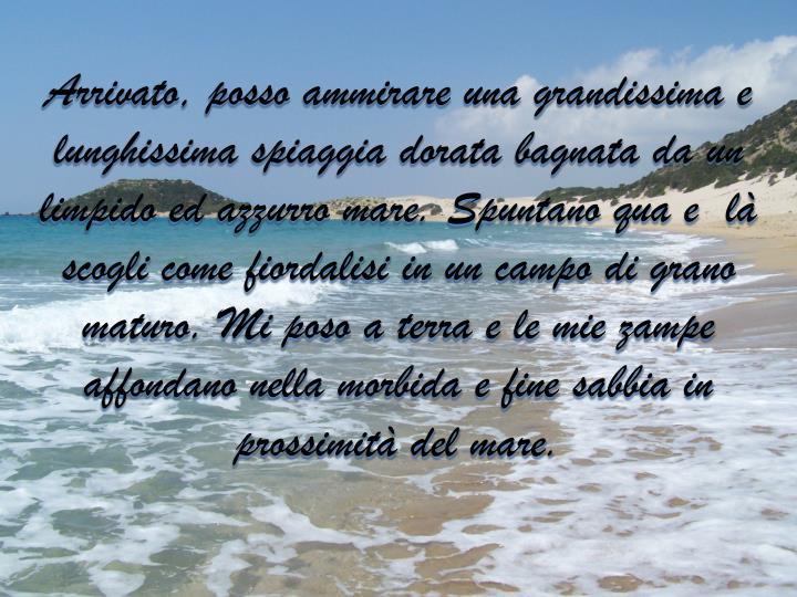 Arrivato, posso ammirare una grandissima e lunghissima spiaggia dorata bagnata da un limpido ed azzurro mare. Spuntano qua e  là scogli come fiordalisi in un campo di grano maturo. Mi poso a terra e le mie zampe affondano nella morbida e fine sabbia in prossimità del mare.