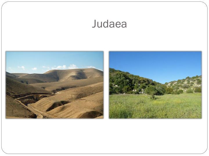 Judaea