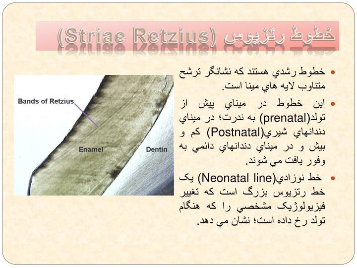 خطوط رتزيوس (