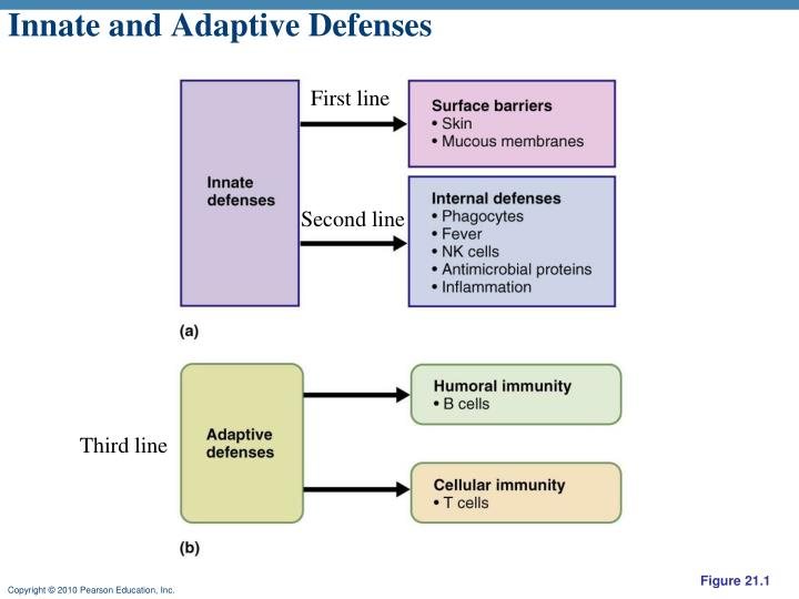 Innate and Adaptive Defenses