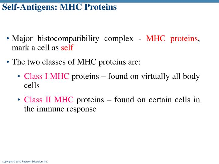 Self-Antigens: MHC Proteins