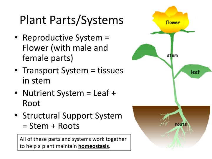 Plant Parts/Systems