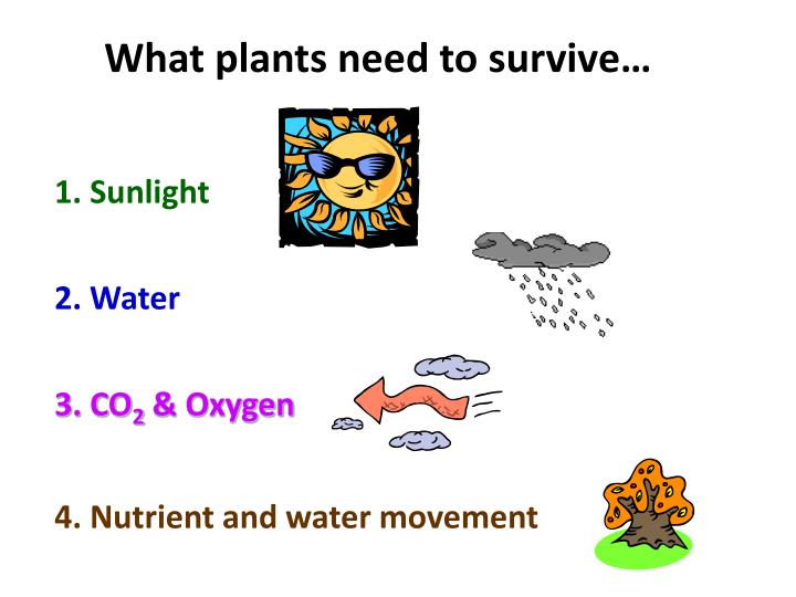 What plants need to