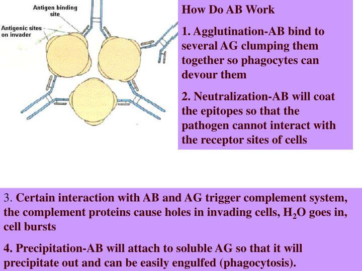 How Do AB Work