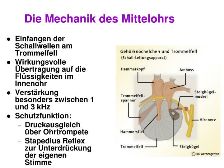 Die Mechanik des Mittelohrs