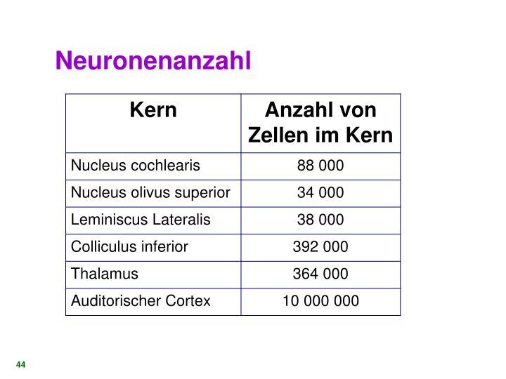 Neuronenanzahl