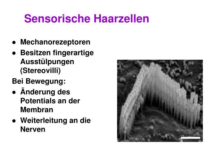 Sensorische Haarzellen
