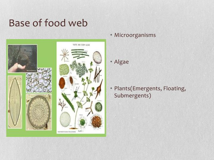 Base of food web
