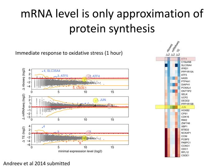 mRNA level is only approximation of protein synthesis
