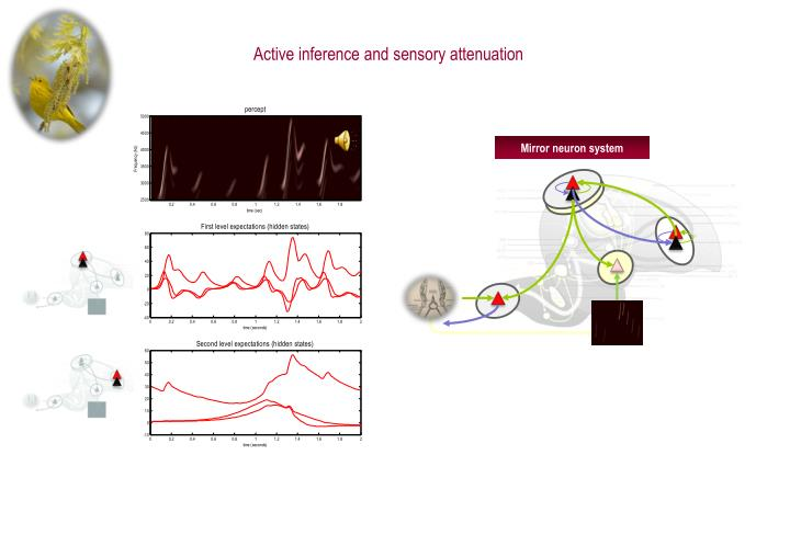 Active inference and sensory attenuation