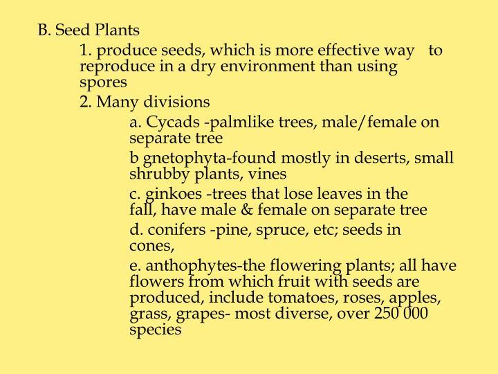 B. Seed Plants