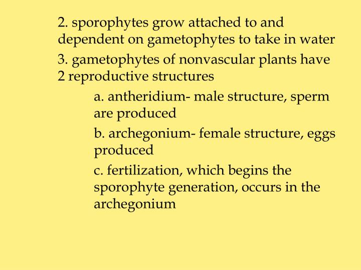 2. sporophytes grow attached to and dependent on gametophytes to take in water
