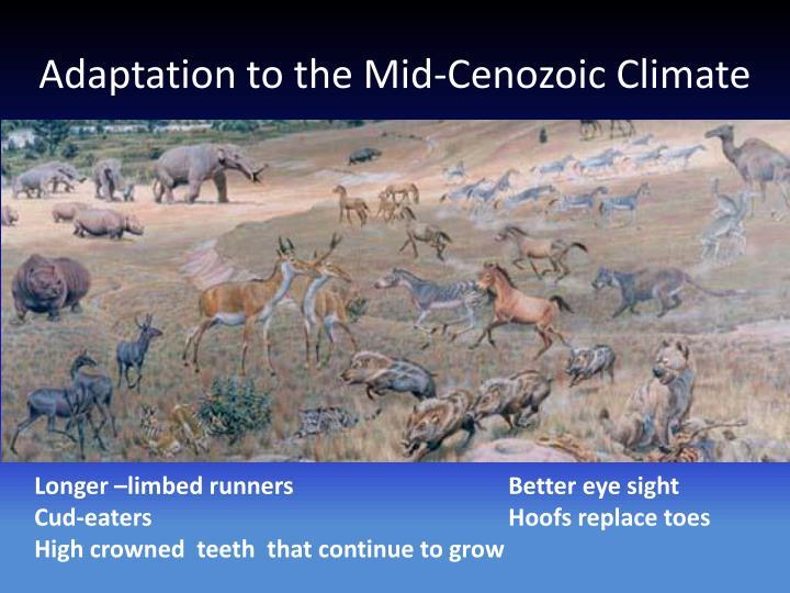 Adaptation to the Mid-Cenozoic Climate