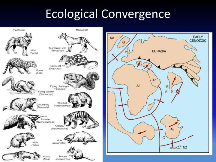 Ecological Convergence
