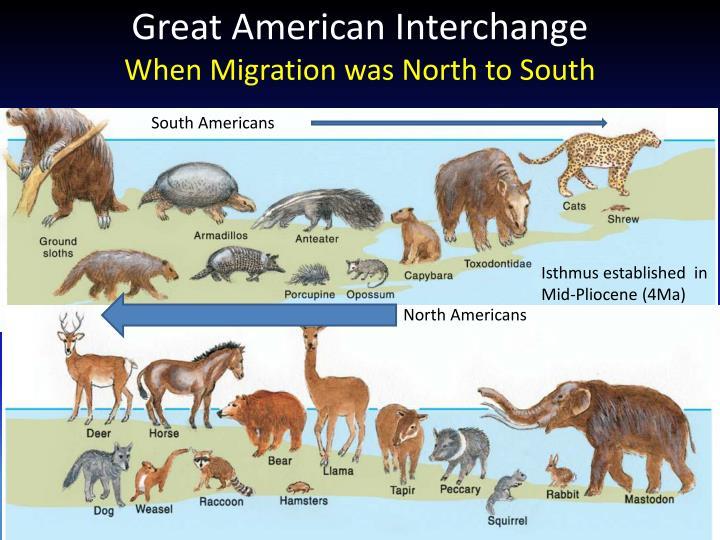 Great American Interchange
